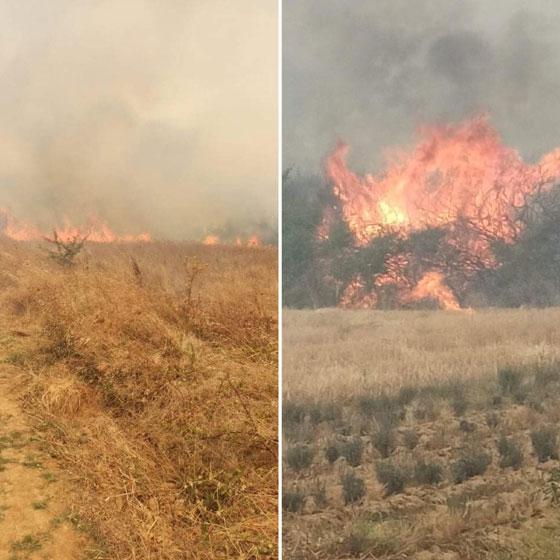 Φωτιά κατακαίει δασική έκταση στην Αισύμη (video)