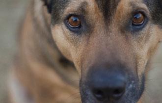 Προειδοποιούν για θανατώσεις ζώων οι Animal Killers Thrakis