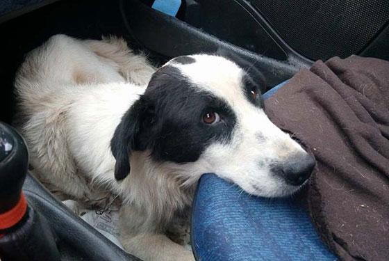 Μαϊστρος Αλεξ/πολης: Συστηματικός βασανισμός σε σκυλίτσα με ατσάλινη θηλιά.