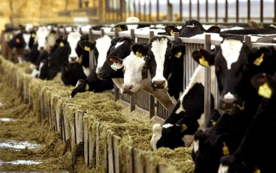 Περιφέρεια ΑΜ-Θ: Προώθηση των αιτημάτων των κτηνοτρόφων από τους Βουλευτές του ΣΥΡΙΖΑ