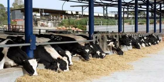 Δημοτικό σφαγείο Φερών: Υποδομή για την ανάταξη της κτηνοτροφίας στον Νότιο Έβρο