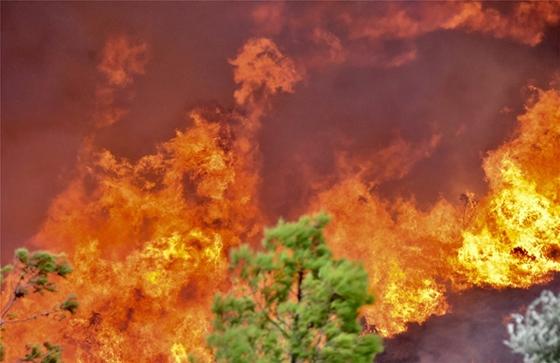 Πως θα εκκενωθούν τα Δίκελλα και η Μάκρη Αλεξανδρούπολης σε περίπτωση πυρκαγιάς;