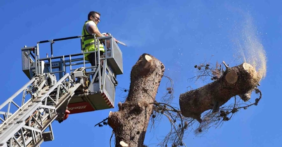 Υπάρχουν ξερά ή επικίνδυνα δέντρα στη γειτονιά σας; Ο Δήμος Αλεξανδρούπολης θέλει να το ξέρει!