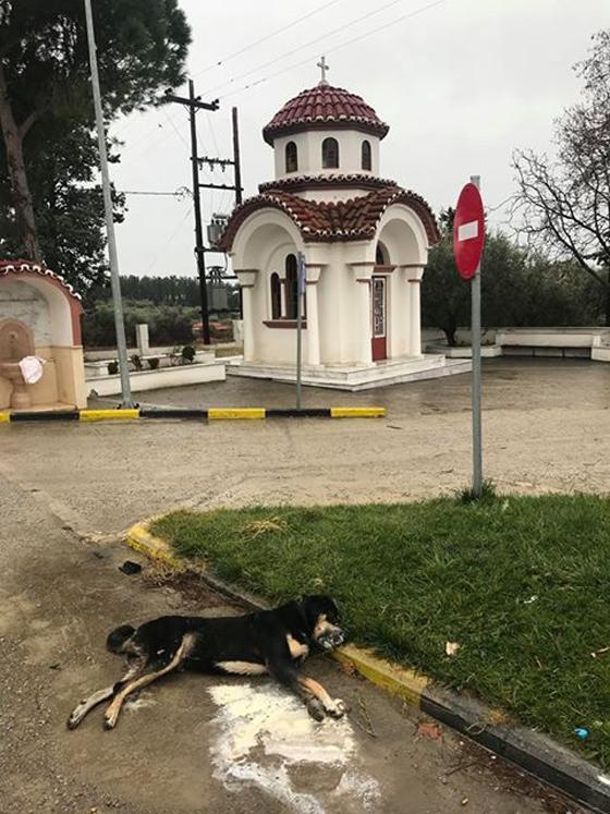 Ακόμη ένα αδέσποτο θύμα φόλας στα Δίκελλα Αλεξανδρούπολης