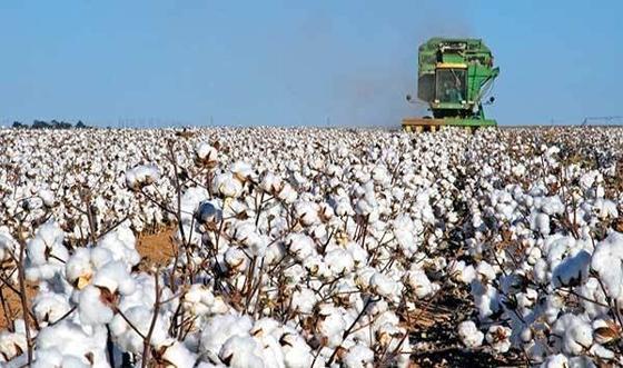 Tι θα γίνει με τις αποζημιώσεις των βαμβακοπαραγωγών στη Θράκη; - Ο Υπουργός απάντησε