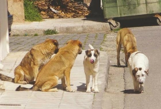 Φροντίζετε αδέσποτα ζώα; Ο Δήμος Αλεξανδρούπολης θέλει να το γνωρίζει!