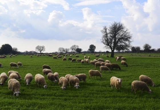 Κτηνοτρόφοι της ΑΜ-Θ: «Ζούμε το όνειρό μας»!