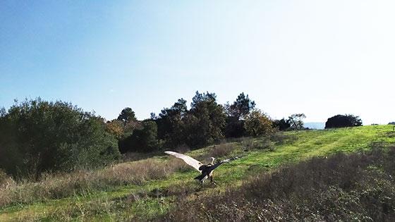 Ένα σπάνιο όρνεο απελευθερώθηκε από το δάσος της Δαδιάς (φωτο)