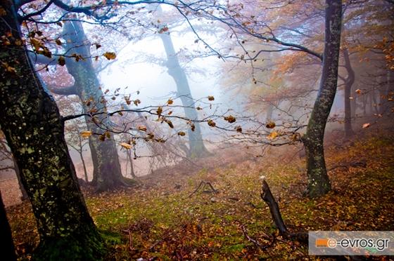 Φθινοπωρινή ισημερία 2020: Πότε έρχεται επίσημα το Φθινόπωρο