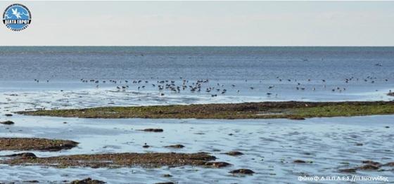 Χειμερινές καταμετρήσεις στο Δέλτα Έβρου -  Νέο ρεκόρ για τον υγροβιότοπο