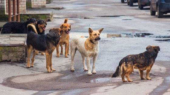 Θλιβερά στοιχεία για την κακοποίηση ζώων στην Ελλάδα