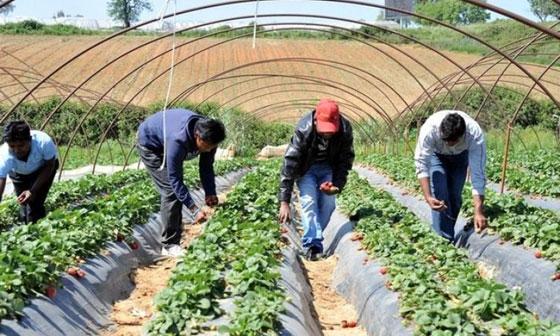 Από τα hot spot στα χωράφια- Το νέο σχέδιο για την ενσωμάτωση των μεταναστών