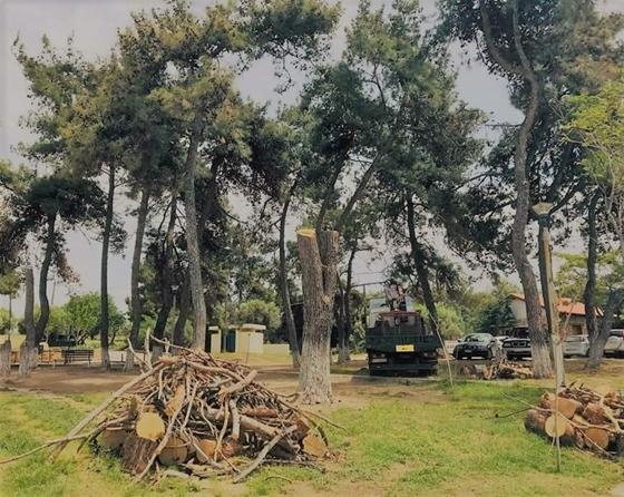 """Δήμος Αλεξανδρούπολης: """"Η Δασική Υπηρεσία υπεύθυνη για τις κοπές των δέντρων στην Αγία Παρασκευή"""""""