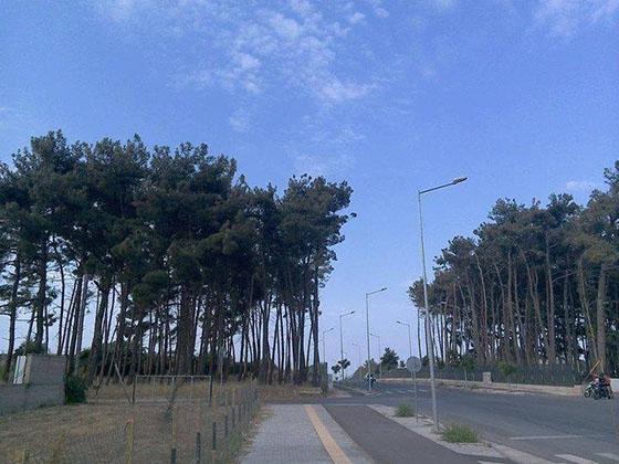 """Σε λίγες ημέρες θα κριθεί η """"τύχη"""" για το δασάκι του μικρού περιφερειακού στην Αλεξανδρούπολη"""