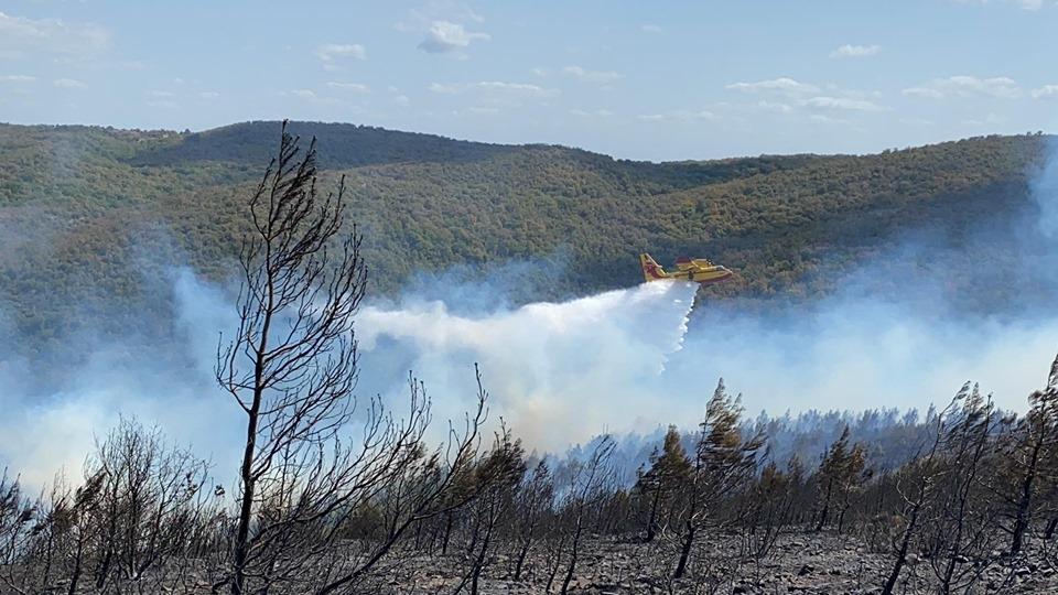 Μεγάλη πυρκαγιά έκαψε πευκοδάσος ανάμεσα σε Μελία και Νίψα στην Αλεξανδρούπολη (video & photo)