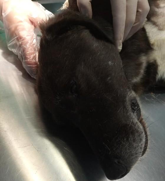 Κτηνωδία στην Αλεξανδρούπολη: Μαχαίρωσαν αδέσποτο σκύλο (φωτο)