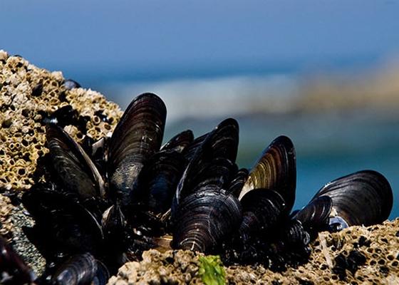 Αίρονται τα περιοριστικά μέτρα στις ζώνες αλιείας Ζώντων Δίθυρων Μαλακίων