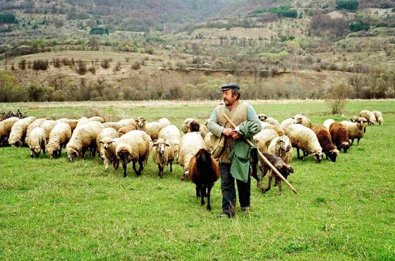 Παράταση πληρωμής των οφειλών των κτηνοτρόφων