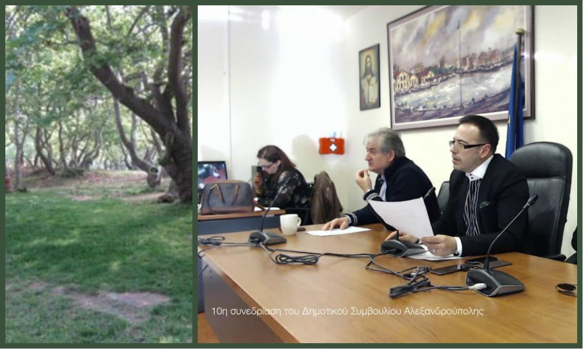 Ένταση και σύγκρουση για τον Πλατανότοπο Μαΐστρου στο Δημοτικό Συμβούλιο Αλεξανδρούπολης