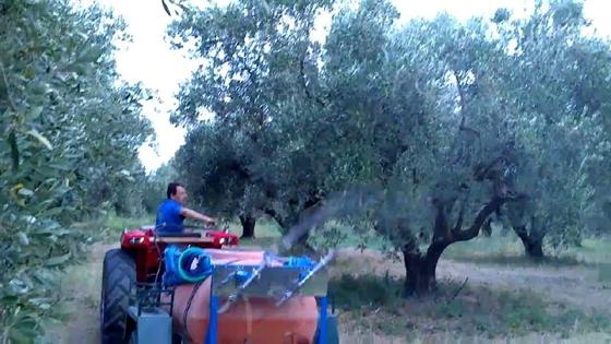 Π.Ε. Έβρου: Ψεκασμοί ελαιοδέντρων κατά του δάκου.