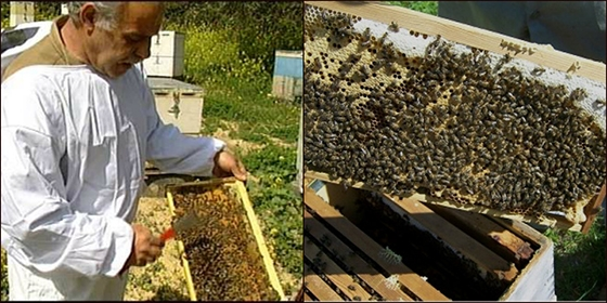 Έντονη ανησυχία μετά τις δεκάδες κλοπές σε μελισσοσμήνη εκφράζουν οι μελισσοκόμοι του Έβρου