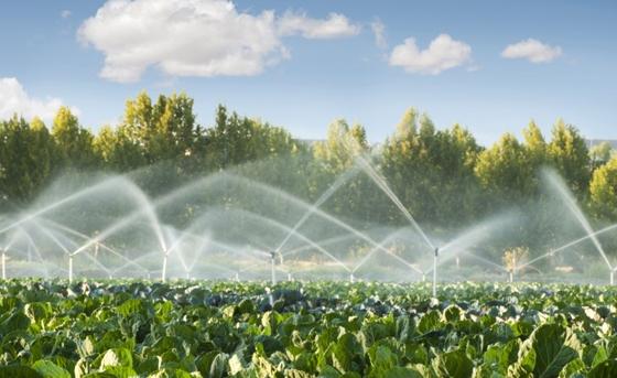 Πλήθος καλλιεργειών έμειναν απότιστες με απόφασης της ΔΕΗ